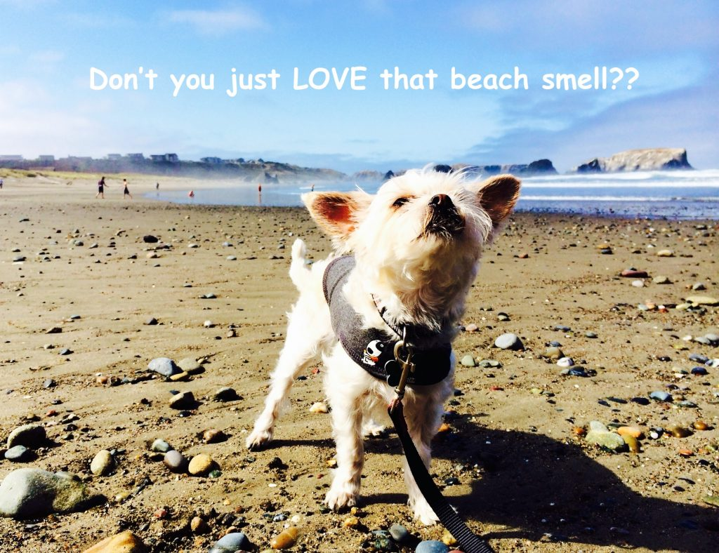 The Beach Smell